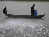 """Nông dân nuôi cá tra """"ôm nợ"""" vì doanh nghiệp ôm tiền tỉ bỏ trốn ra nước ngoài"""