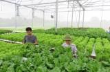 Nâng cao chất lượng nông sản - Gia tăng giá trị và sức cạnh tranh
