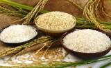 Giá trị xuất khẩu gạo tăng mạnh, Trung Quốc vẫn là thị trường chính