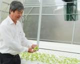 Hỗ trợ hợp tác xã phát triển nông nghiệp công nghệ cao