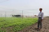 Nông nghiệp ứng dụng công nghệ cao - Cần nhiều mô hình điểm để nhân rộng