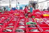 Xuất khẩu thủy sản tiếp tục giữ mức tăng trưởng hai con số