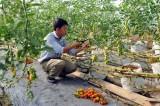 Agribank cho vay 5.108 tỉ đồng phát triển nông nghiệp công nghệ cao