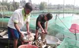 Nông dân chưa nhận được tiền hỗ trợ từ chính sách khuyến khích phát triển nuôi thủy sản