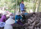 Đẩy mạnh liên kết sản xuất - tiêu thụ nông sản giúp nông dân an tâm sản xuất
