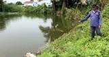 Chuỗi liên kết nuôi cá tra đổ bể khiến nông dân An Giang điêu đứng