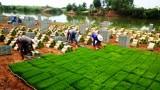 Ngành nông nghiệp - Nỗ lực tăng trưởng mạnh