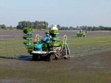 Đẩy nhanh xây dựng hợp tác xã điểm sản xuất nông nghiệp ứng dụng công nghệ cao trên cây lúa
