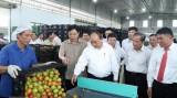 Thủ tướng thăm mô hình sản xuất rau an toàn tại Lâm Đồng