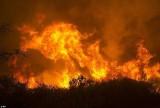 Cháy rừng tại California làm 2 người chết, 17 người mất tích