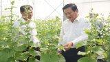 Bí thư Tỉnh ủy Long An tham quan mô hình trồng dưa lưới công nghệ cao