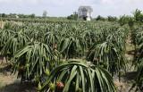 Châu Thành: Đường đến huyện nông thôn mới không còn xa!