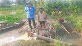 Tân Thạnh: Lũ sớm, ảnh hưởng sản xuất lúa Hè Thu