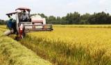 Kiến Tường tập trung thu hoạch lúa Hè Thu năm 2018
