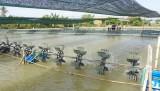 Cần Giuộc: Giá tôm giảm mạnh, nhiều nông dân bỏ đầm