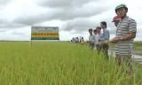 Vĩnh Hưng: Sản xuất lúa hữu cơ, bảo vệ môi trường