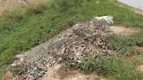 Tân Hưng: Cá tra giống nhiễm bệnh, chết với tỷ lệ cao