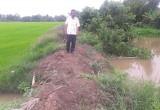 Tân Thạnh: Lũ về sớm, sản xuất lúa Thu Đông gặp khó khăn