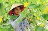 Phát triển nông nghiệp đô thị với mô hình trồng rau sạch trong nhà màng