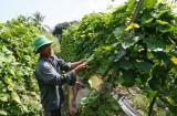 Sản xuất ứng dụng công nghệ cao - Tăng thu nhập cho nông dân