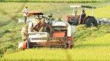 9 tháng năm 2018, tổng sản lượng lúa của Thạnh Hóa đạt 108,2% kế hoạch
