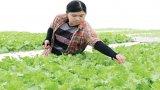 Chuyển đổi cây trồng mang lại hiệu quả cao
