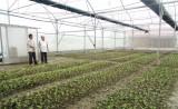 Cần Giuộc có gần 9.500 nông dân sản xuất - kinh doanh giỏi các cấp