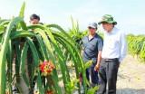 Thu nhập cao nhờ mạnh dạn chuyển đổi cây trồng