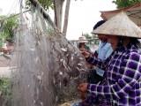 Khai thác nguồn lợi thủy sản cuối mùa lũ
