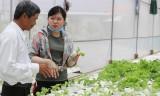 """Phát triển nông nghiệp ứng dụng công nghệ cao cần những giải pháp """"bứt phá"""""""