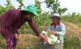 Chuyển đổi cây trồng ở xã biên giới