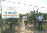 Hiệu quả từ chương trình phát triển nông nghiệp ứng dụng công nghệ cao