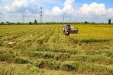 Festival Lúa gạo lần III tại Long An: Sự kiện lớn có ý nghĩa không chỉ riêng của tỉnh
