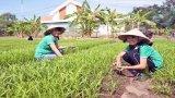 Rèn luyện kỹ năng sống với vườn rau trong trường học