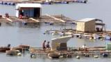 Ứng phó bão số 9: Phú Yên gấp rút sơ tán người trên các bè thủy sản