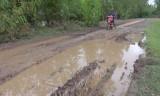 Vĩnh Hưng: Đường KT7 xuống cấp trầm trọng