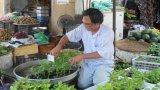 Thú vui tự trồng hoa tết tại nhà
