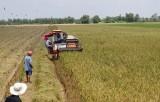 Mộc Hóa: Sản lượng lương thực chưa đạt kế hoạch đề ra