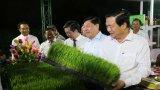 Khai mạc Festival Lúa gạo Việt Nam lần thứ 3 năm 2018