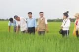 Tham quan, học tập một số mô hình nông nghiệp tại Sóc Trăng