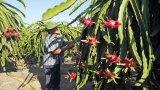 Năm 2019, Long An phấn đấu tốc độ tăng trưởng nông nghiệp đạt 1,5%
