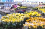 Hơn 400 gian hàng phục vụ chợ hoa xuân TP.Tân An