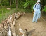 Tập trung phòng, chống dịch bệnh trên gia súc, gia cầm