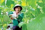 """""""Tin xuân"""" sản xuất nông nghiệp ứng dụng công nghệ cao"""
