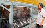 Về Cần Đước thưởng thức khô cá dứa