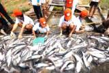 Xuất khẩu cá tra đặt mục tiêu 2,4 tỷ USD năm 2019