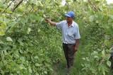 Phát triển hợp tác xã nông nghiệp ứng dụng công nghệ cao: Hướng đi tất yếu