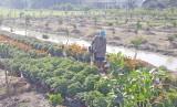 Tân Trụ: Hướng đến giảm nghèo bền vững