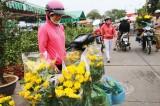 Nhộn nhịp chợ hoa, cây cảnh ngày tết