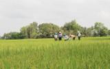 Nông dân vui tết, không quên ruộng đồng